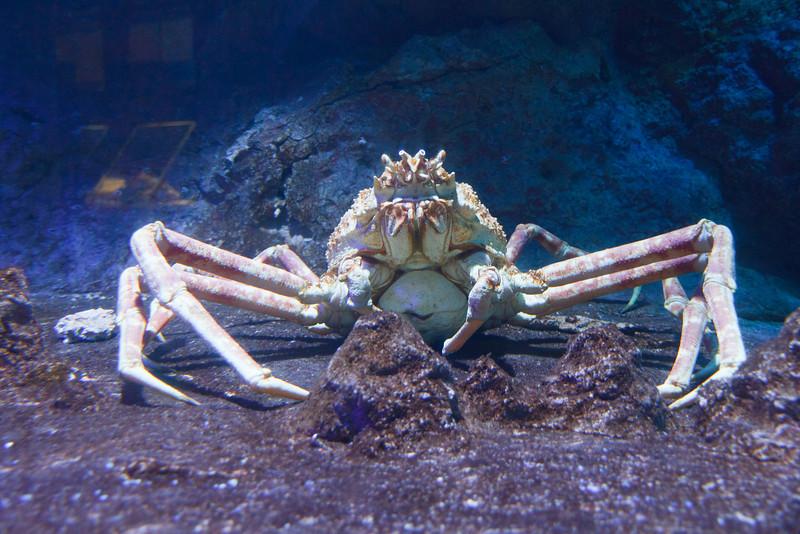 Aquarium on Sentosa Island