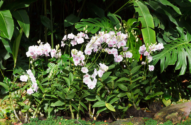 National Orchid Garden of Singapore