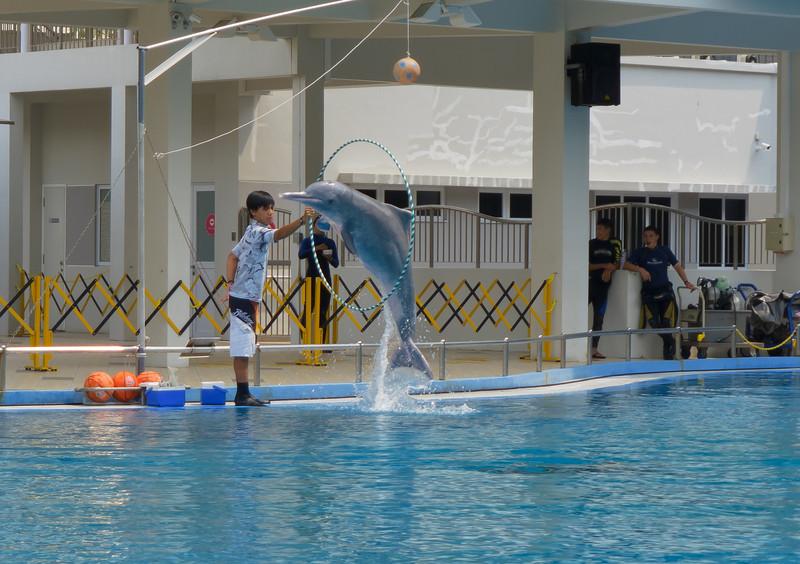 Dolphin Show at the Aquarium on Sentosa Island