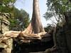Ta Prohm Temple - Siem Reap Cambodia