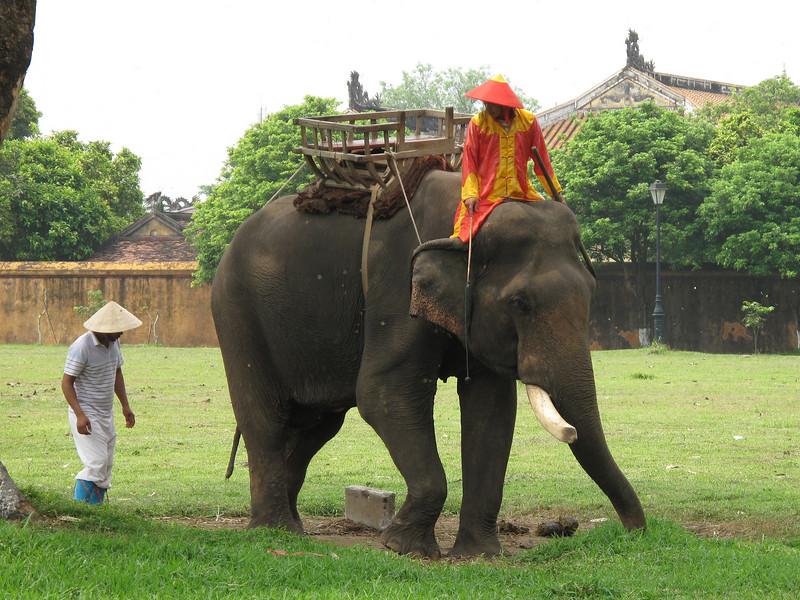 Elephant on the grounds of the Thai Hoa Palace