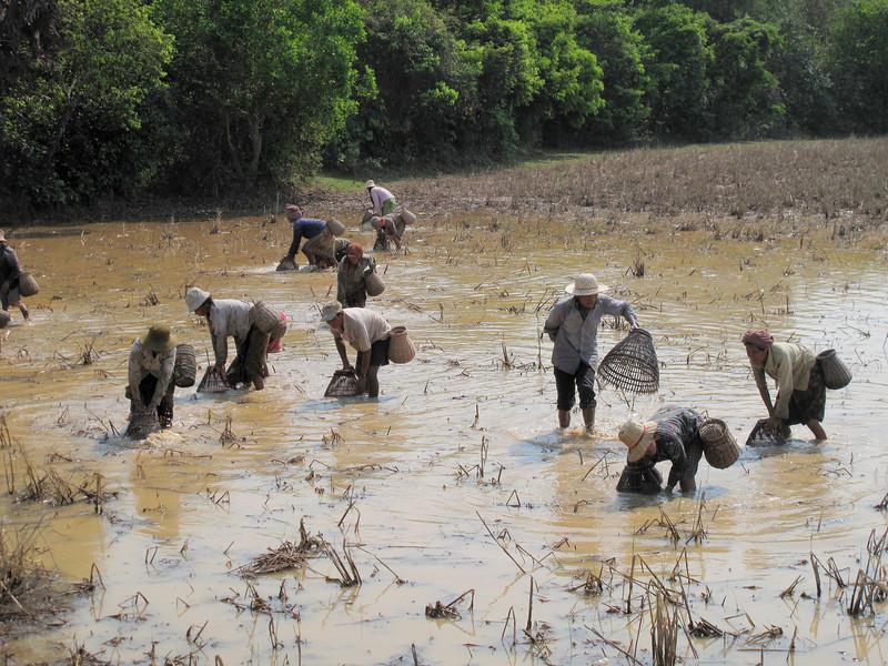 Pond Fishing in Cambodia