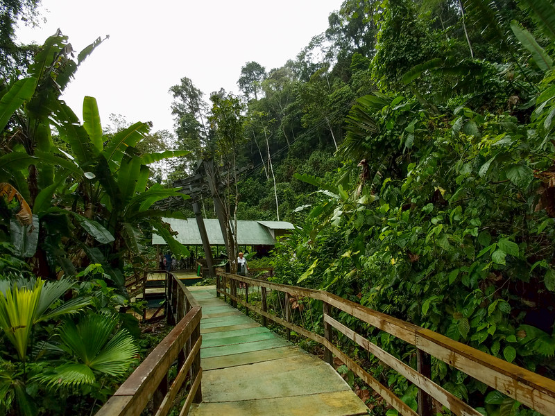Beginning of the walkway to the Puma Waterfall in the Veragua Rainforest.