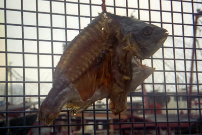 A fish pegged to the fence near the shipyards on the Zhuhai side of Macau. ... July 27, 2004 ... Copyright Robert Page III