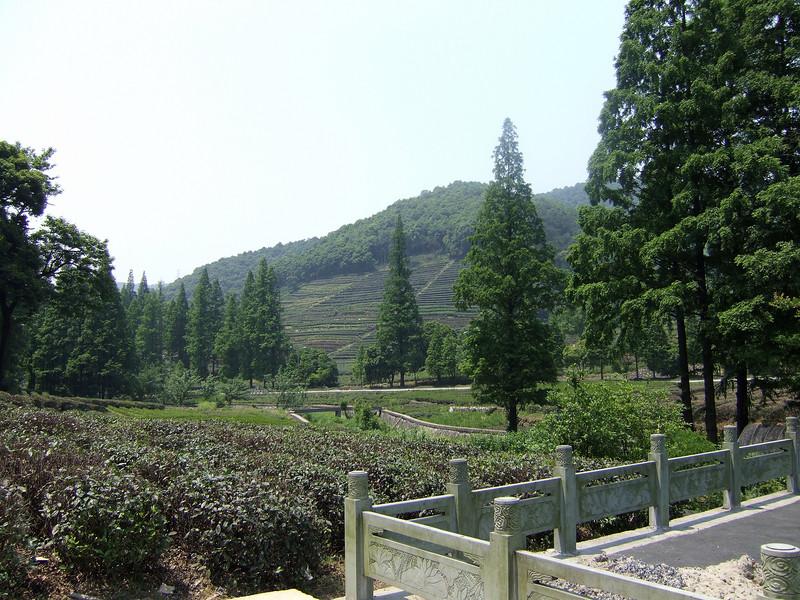 Dragon Well Tea Plantation