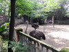 Ostrich at the Chongqing Zoo