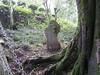 Botanical identification stone