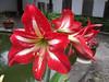 Flower in the Garden - White Emperor Town