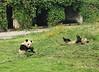 Chongqing Zoo Giant Pandas
