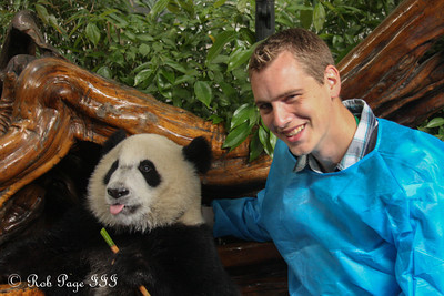 Rob with a panda at the Chengdu Research Base of Giant Panda Breeding - Chengdu, China ... October 5, 2012 ... Photo by Emily Page