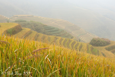 Exploring the rice terraces of Longji - Longsheng, Guangxi, China ... October 6, 2012 ... Photo by Rob Page III