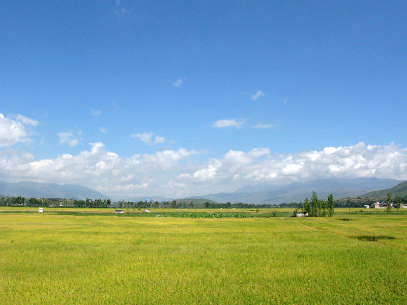 Rice field at Lijian
