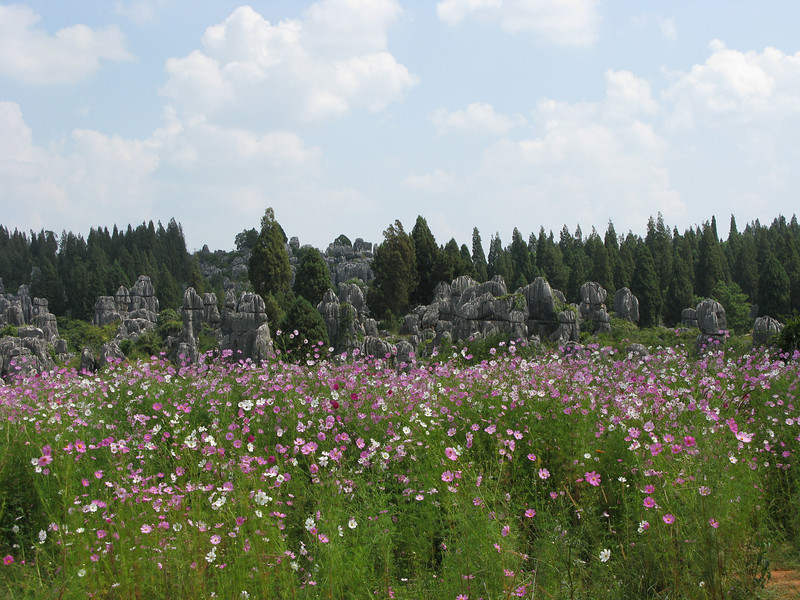 Stone Forest in a Field of Flowers