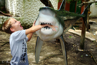 Jesse feeds the shark - Cartagena, Colombia ... October 17, 2011 ... Photo by Emily Page