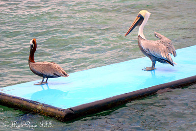 Birds - Cartagena, Colombia ... October 17, 2011 ... Photo by Emily Page