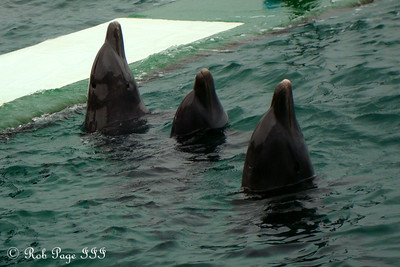 Dolphins - Cartagena, Colombia ... October 17, 2011 ... Photo by Emily Page