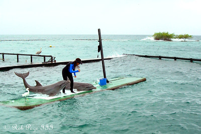 Playing with dolphins - Cartagena, Colombia ... October 17, 2011 ... Photo by Emily Page