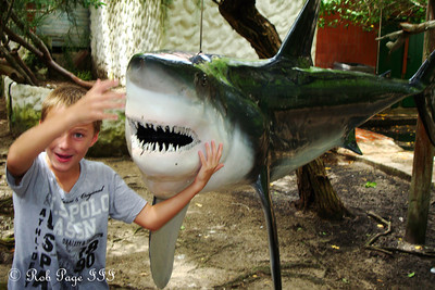 Jesse plays with the shark - Cartagena, Colombia ... October 17, 2011 ... Photo by Emily Page