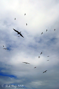 Beware of the birds - Cartagena, Colombia ... October 17, 2011 ... Photo by Emily Page