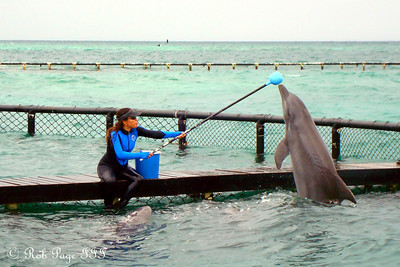 Dolphins! - Cartagena, Colombia ... October 17, 2011 ... Photo by Emily Page