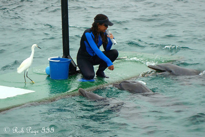 Feeding the dolphins - Cartagena, Colombia ... October 17, 2011 ... Photo by Emily Page