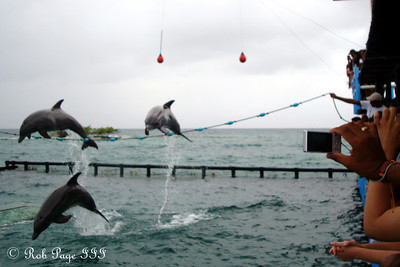 Leaping dolphins - Cartagena, Colombia ... October 17, 2011 ... Photo by Emily Page
