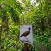 Bird watch along the trail inside Hanging Bridges Park in Costa Rica.