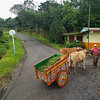 Old Timer (aka the Dollar Man) showing his Classic Ox Cart in San Jose, Costa Rica.