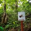 Spider watch inside Hanging Bridges Park in Costa Rica.