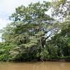 Scenery along the Rio Frio River in Costa Rica.