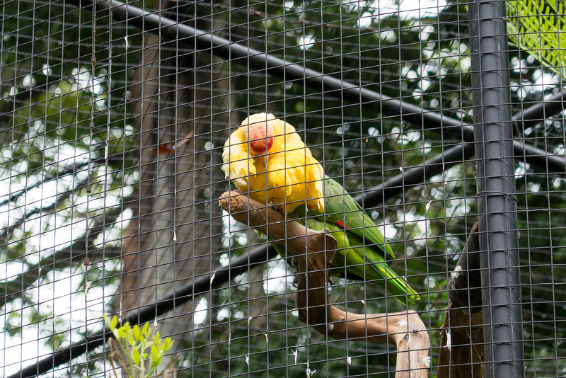 Yellow headed parrot at the Zooave Rescue Center.