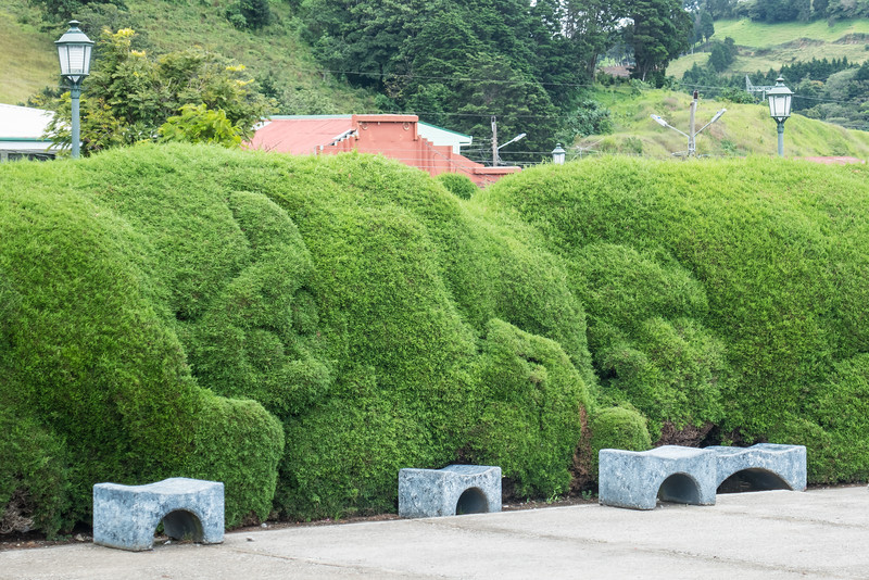 Cat sculpted into the hedges at the Catholic Church in Sarchi, Costa Rica.