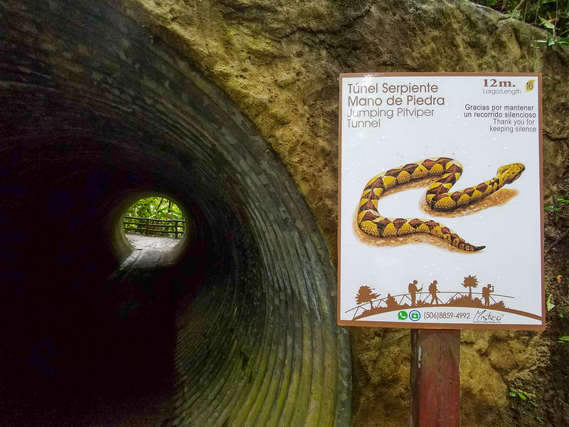 Another snake you don't want to meet at Hanging Bridges Park in Costa Rica.