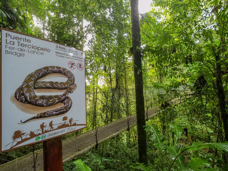 A snake you don't want to meet on the trail at Hanging Bridges Park in Costa Rica.