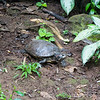 A turtle at the Costa Rican Zooave Animal Rescue Center.