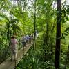 Crossing a long wire suspension hanging bridge in Hanging Bridges Park,  Costa Rica.