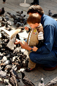 A father feeds pigeons with his son - Dubrovnik, Croatia ... May 1, 2008 ... Photo by Emily Page