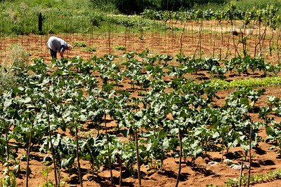 Working the fields - Korcula, Croatia ... May 3, 2008 ... Photo by Rob Page III