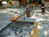 Roast Pig at Bodega del Valle in Cienfuegos, Cuba.