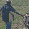 on the drive into the park, we saw this wildlife ranger leading an orphaned zebra to a herd to integrate