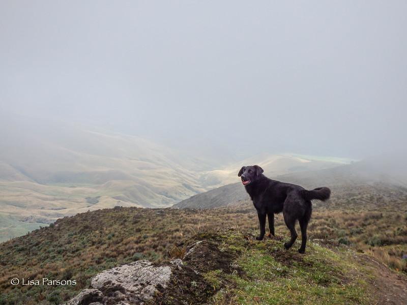 Porter's Dog