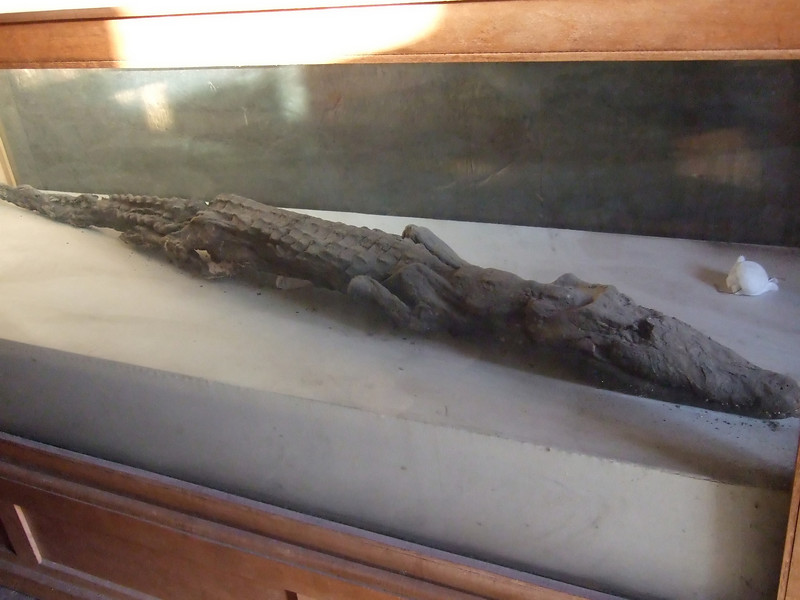 Mummified Crocodile at the Temple of Sobek Then