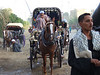 A Horse Carriage ride to Luxor Temple