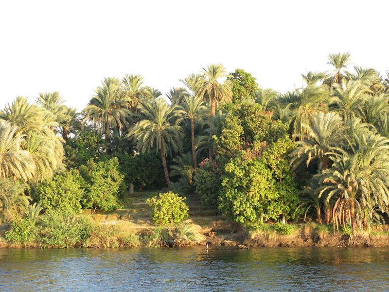 Scenery along the Nile