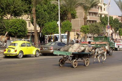 A donkey runs down the street - Cairo, Egypt ... November 21, 2006 ... Photo by Rob Page III
