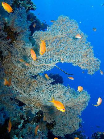 The gorgonian corals were fantastic!