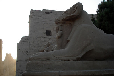 Standing guard at Karnak - Luxor, Egypt ... November 24, 2006 ... Photo by Emily Conger