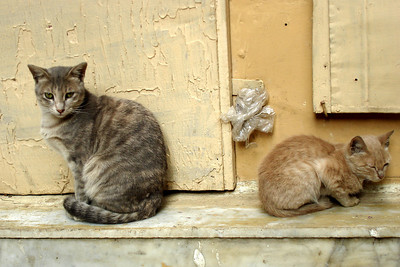 Emily's kittens in Khan Al-Khalili - Cairo, Egypt ... November 21, 2006 ... Photo by Emily Conger