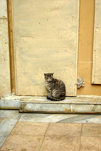 One of Emily's kittens in Khan Al-Khalili - Cairo, Egypt ... November 21, 2006 ... Photo by Emily Conger