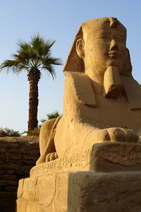 One of the sphinxes along the Avenue of Sphinxes outside the Luxor Temple - Luxor, Egypt ... November 24, 2006 ... Photo by Rob Page III